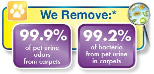 we remove pet odor and bacteria