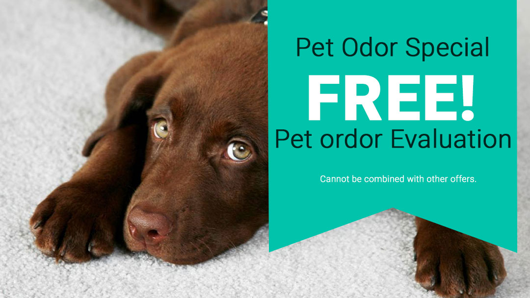 Coupon for Free Pet Odor Evaluation. Restrictions apply.